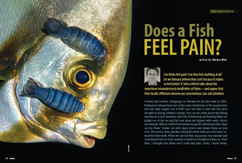 Does a Fish Feel Pain? Swiss ethicist Prof. Dr. Markus Wild talks about the sometimes misunderstood sensitivities of fishes—and argues that their health afflictions deserve our conscientious care and attention.