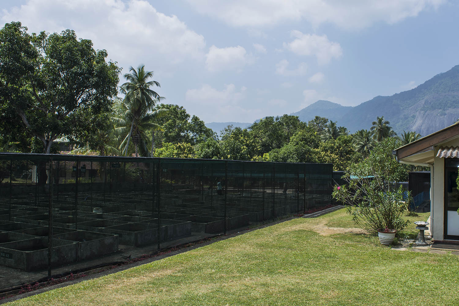 Situated in the tropical highlands of Sri Lanka's Hill Country, the ornamental fish breeding and training center at Rambadagalla is an expansive complex