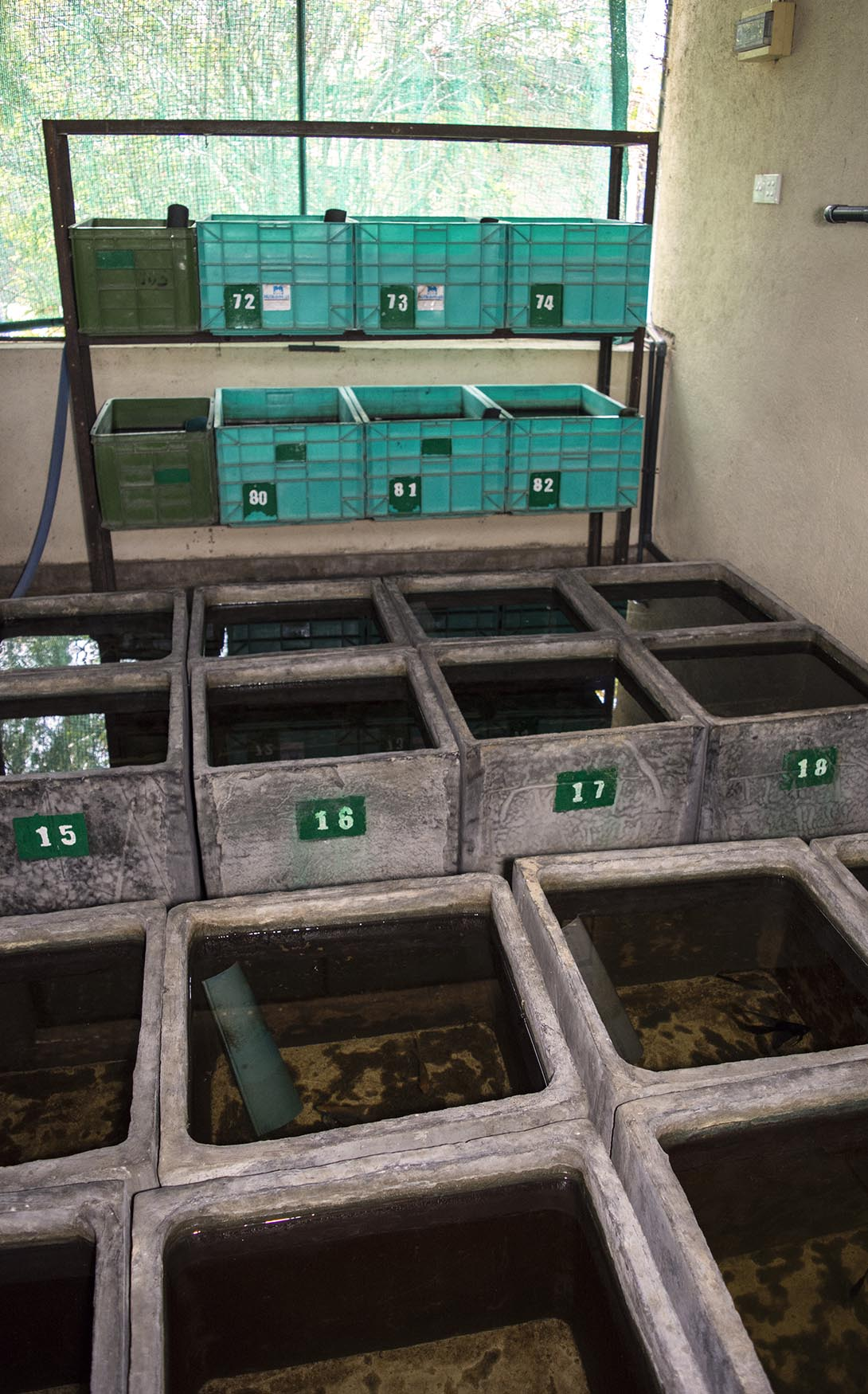 An Angelfish breeding room housing a number of broodstock pairs. Breeders here work on improving efficiency and troubleshooting problems the commercial producers experience