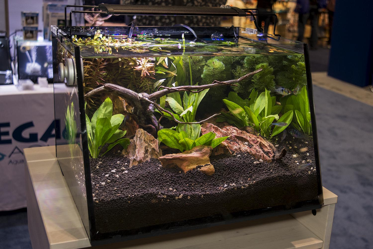 Another new product for Lifegard, the Full View aquarium kit. From the looks of things at this show, sloped is the new curved for glass aquariums.