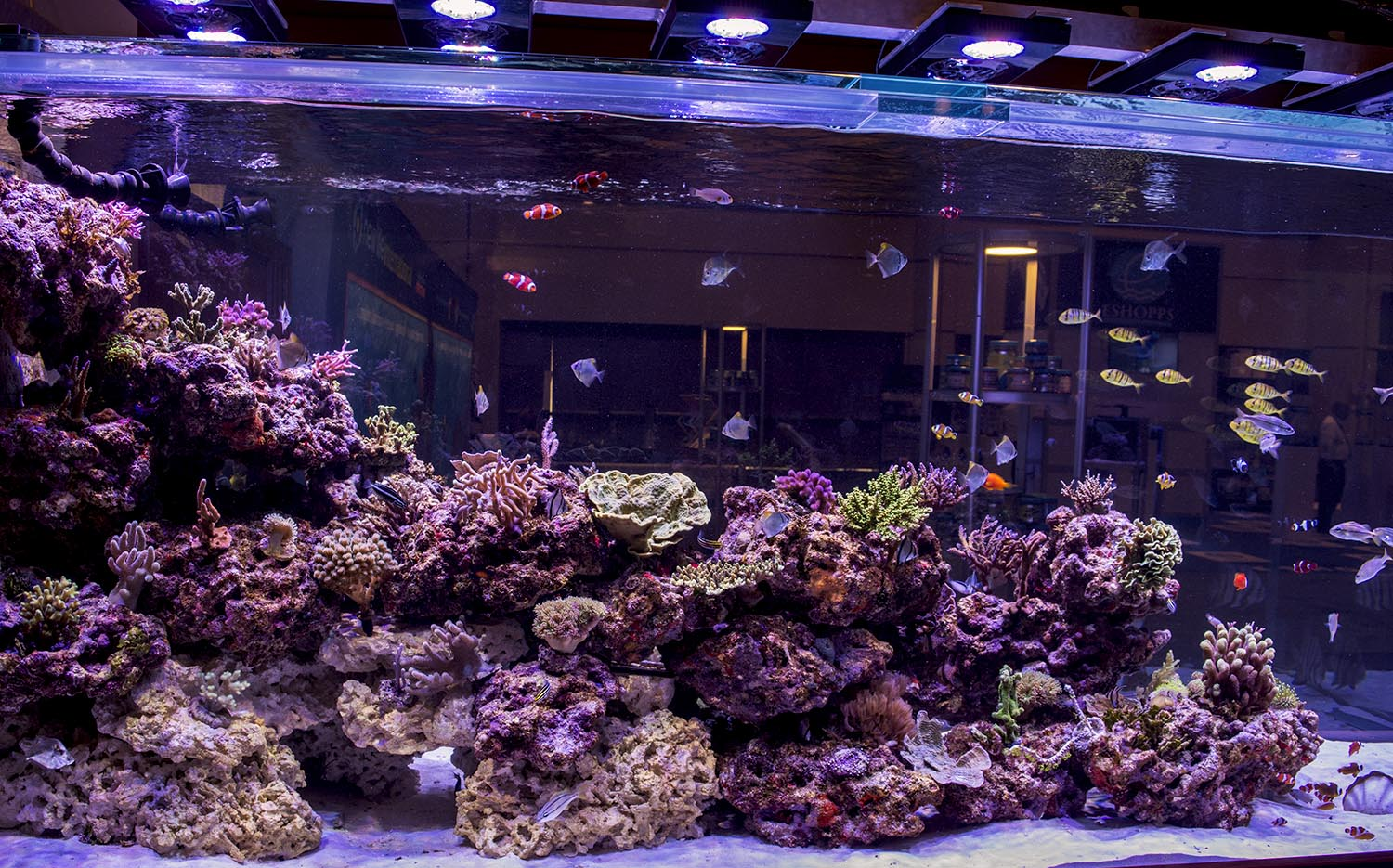 The awe inspiring 100% aquaculture tank from Boyd/Reef Aquaria Design
