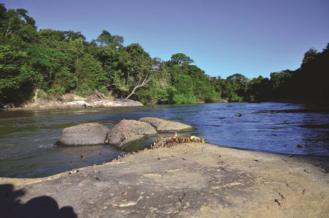 Type locality of Aphanotorulus rubrocauda, Brazil, Amazonas State, Apuí Municipality, boulders on rapids 40 minutes above of the Comil farm, rio Madeirinha, rio Aripuanã basin. Photo by Willian Ohara. CC-BY-4.0