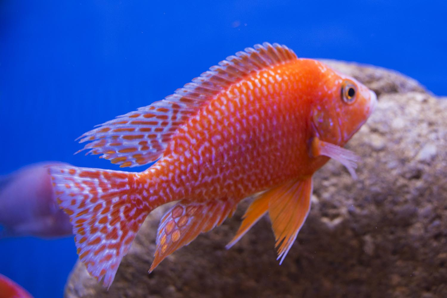 The Exceptional Fish of the 2017 Global Pet Expo