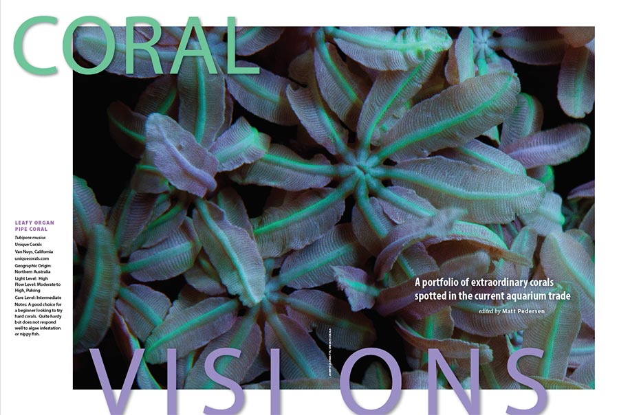 CORAL Magazine's CORAL VISIONS feature for May/June 2017 invites you in with a pastel beauty; Organ Pipe Coral shared by Unique Corals.