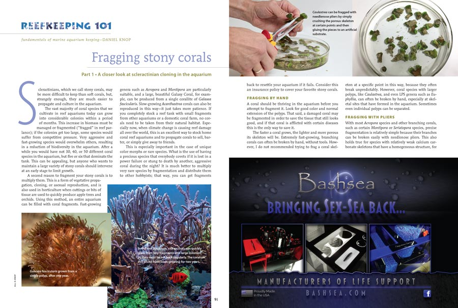 Reefkeeping 101 takes a current look at coral fragging and propagation for the beginning reef aquarist.