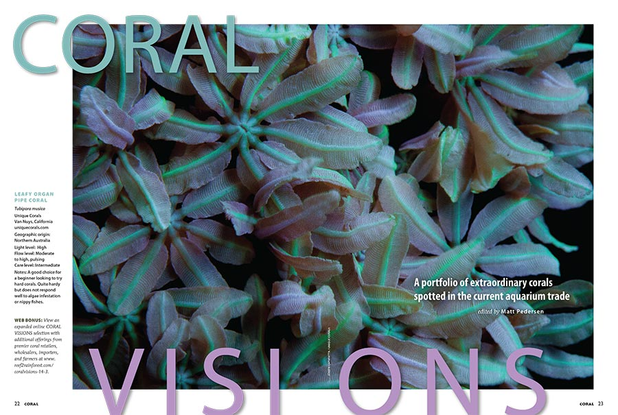 "CORAL VISIONS opens with an unusual Organ Pipe Coral, Tubipora musica, from Unique Corals. Turn the page to see what other showstopping surprises wait inside. Look elsewhere on the site for a collection of corals that were ""culled"" in the selection of specimen chosen to be immortalized in print!"