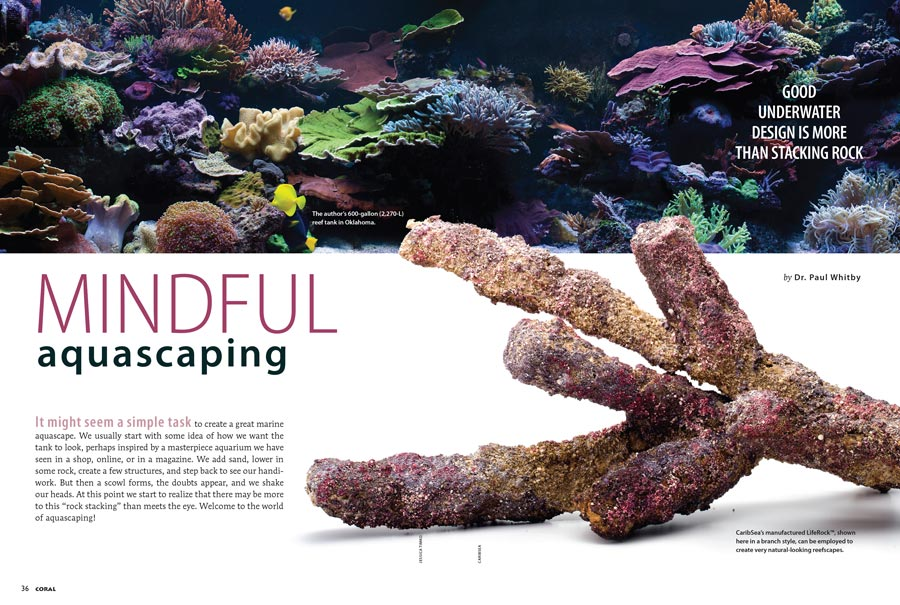 First time CORAL contributor Dr. Paul Whitby is well known on the aquarium lecture circuit for his expertise in reef aquascaping. Now, we bring his insights to the world in his debut article, Mindful Aquascaping.
