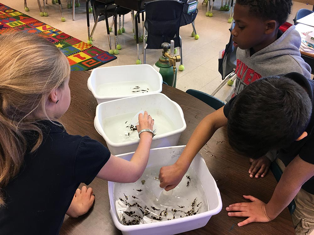 Students prepare clownfish for bagging.