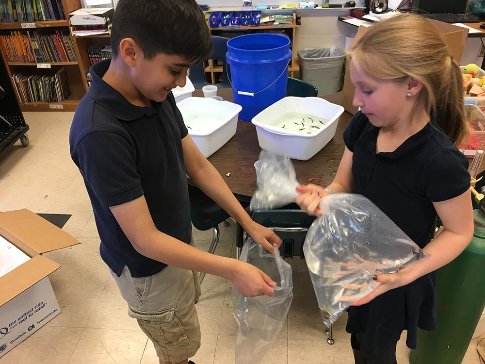 Students carefully bagging clownfish for shipment.