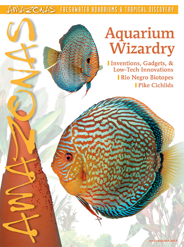 A cornucopia of wisdom is headed your way: cover of AMAZONAS Magazine, Volume 6, Number 4, Aquarium Wizardry! On the cover: Discus pair, Symphysodon aequifasciatus, with clay spawning cone. Image by Hans-Georg Evers