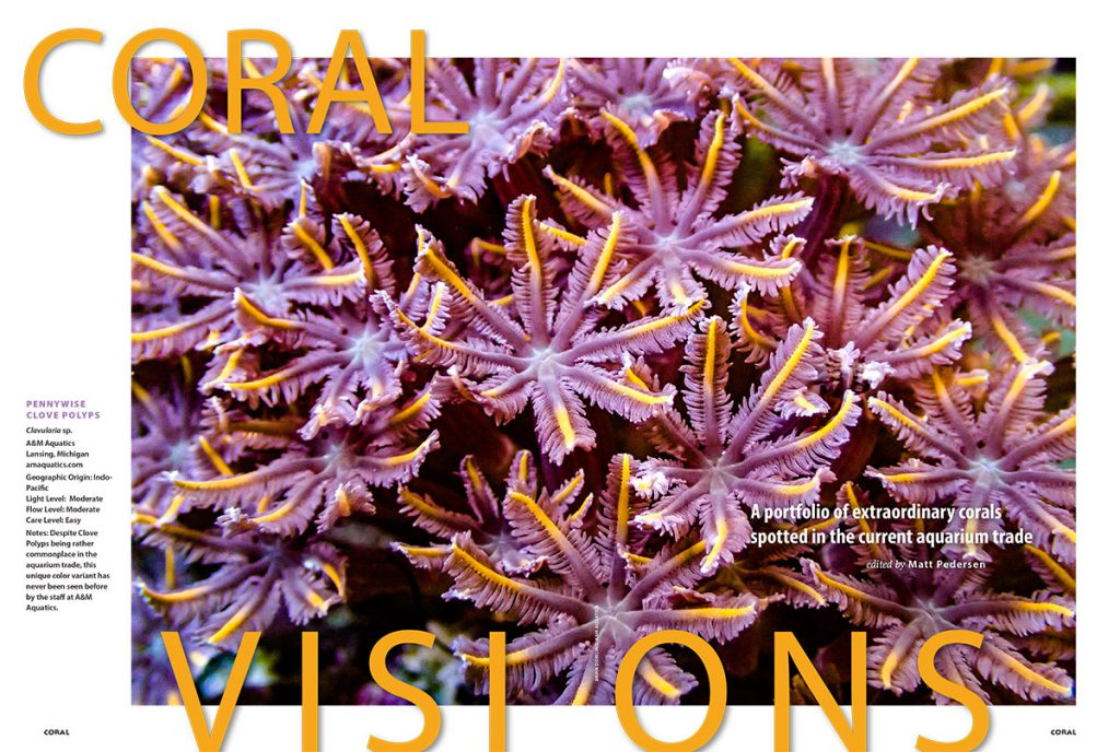 "The July/August 2017 edition of CORAL Magazine's CORAL VISIONS opens with a stunning example of a Clavularia sp. dubbed the ""Pennywise Clove Polyp,"" brought to us by A&M Aquatics."