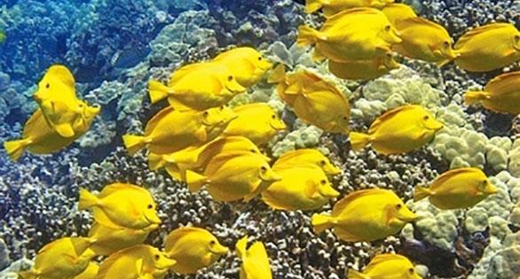 Pseudoscience and the hawaii fishing ban for Fish species hawaii