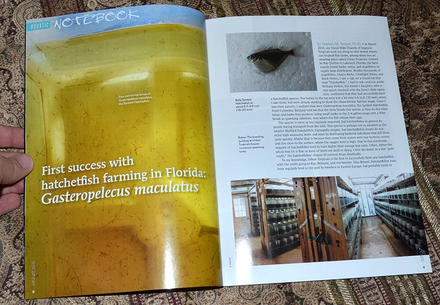 """Aquatic Notebook for the July/August 2014 Issue of AMAZONAS Magazine starts off with the """"First success with hatchetfish farming in Florida: Gasteropelecus maculatus"""", by AMAZONAS Sr. Editor Stephan M. Tanner, Ph.D."""