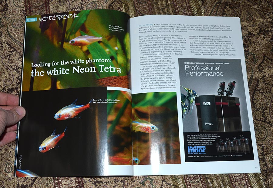"""""""Looking for the white phantom: the white Neon Tetra"""", by Lisa Pfeting"""