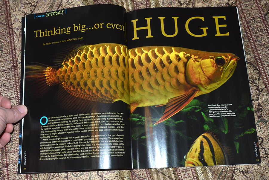 Thinking big...or even HUGE - by Rachel O'Leary & the AMAZONAS Staff