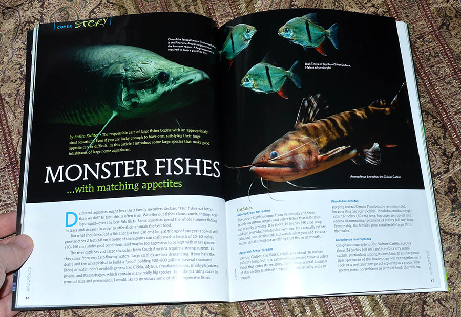 MONSTER FISHES...with matching appetites - by Enrico Richter