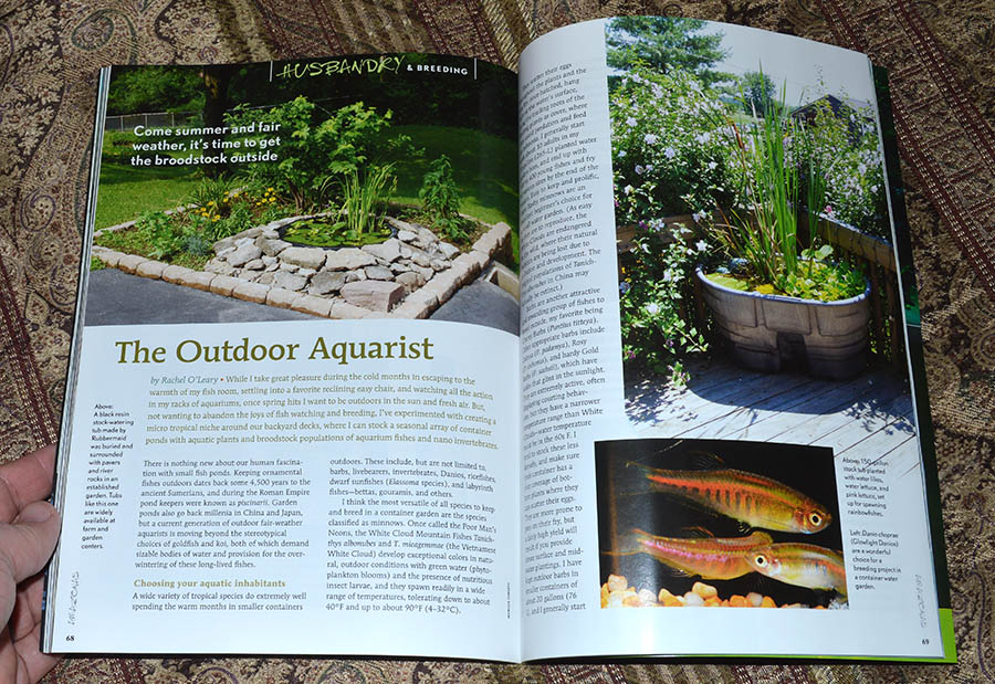 The Outdoor Aquarist - by Rachel O'Leary
