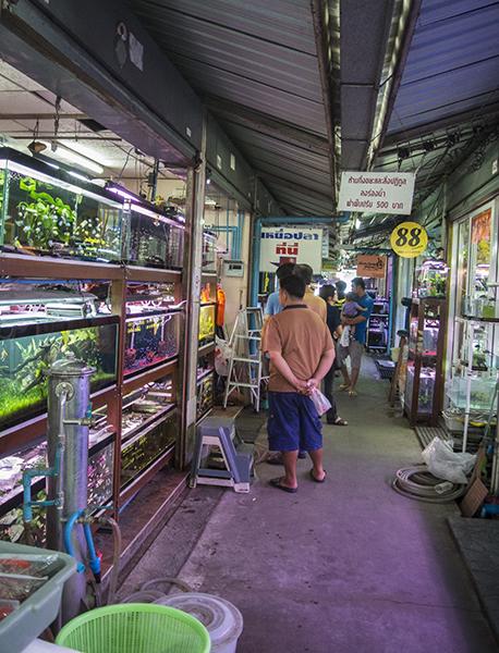 Labyrinth of stalls inside Bangkok's weekend market