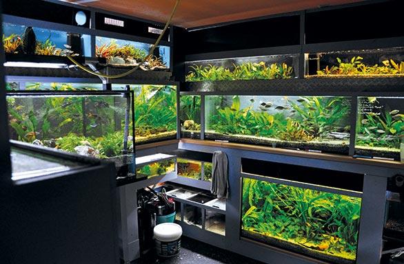 Fishroom Hubert Selig Amp Tanks On Wheels