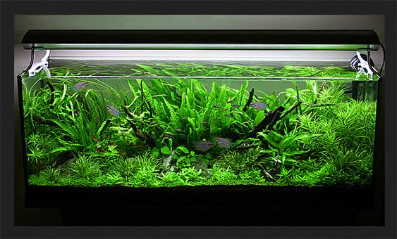 George's 63 gal. Nature Aquarium style aquascape