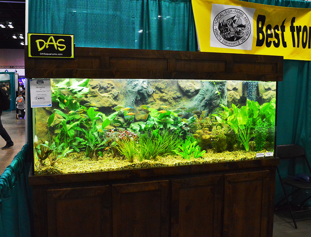 A mix of community type fishes on display at the FTFFA Booth, Aquatic Experience - Chicago, 2015.