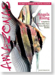 AMAZONAS Magazine, Volume 2, Issue Number 1 - Angels Rising. This is the issue that has Tom dreaming of Altum Angels! Click to order a printed back issue.