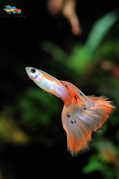 Guppies are a lot of fun and very little work. Don't miss the fun.