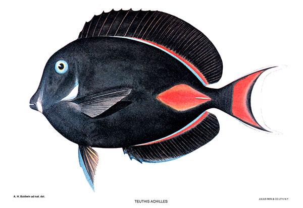 New Anti-Aquarium Bills Come Before Legislature in Hawaii