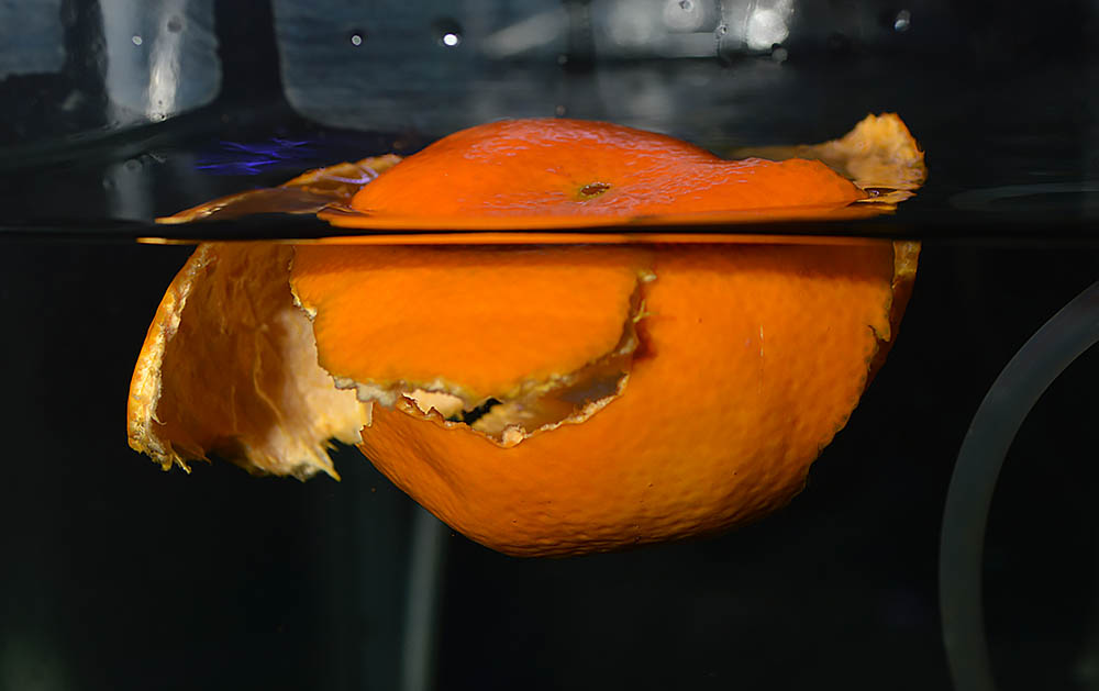 The rind of a clementine now floats in my Discus holding aquarium.