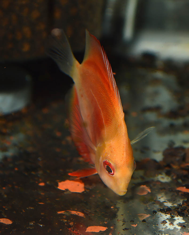 A change of heart - this fish now wants to live.