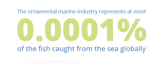 The ornamental marine industry represents at most 0.0001% of the fish caught from the sea globally