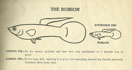 The Robson Guppy, 1955 UK Federation of Guppy Breeder's Society standard.