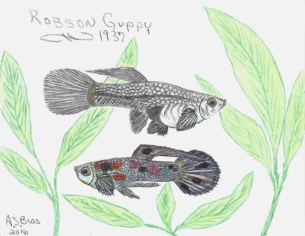 Robson Guppy drawn from early standard descriptions based on wild-type color and pattern.