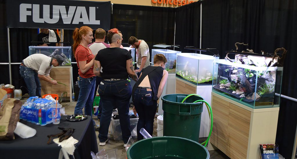 Buckets, hoses, cloudy water, and aquascapers fill the scene as Aquascaping Live! 2016 happens in real time on the show floor.