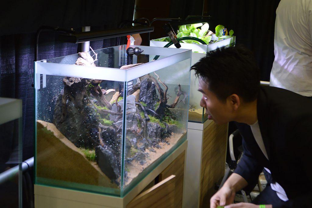 A winning aquascape coming together.