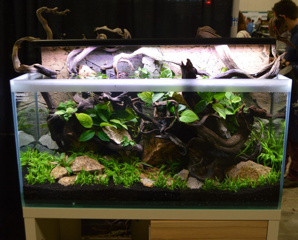AGA Aquascaping Live 2016 - a ninth aquarium on display was not part of the competition, but was part of Oliver Knott's aquascaping demonstrations.