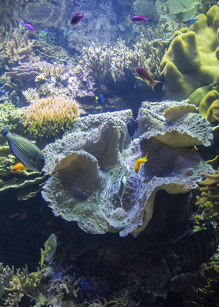 A massive Tridacna clam dominates the layout in this reef tank