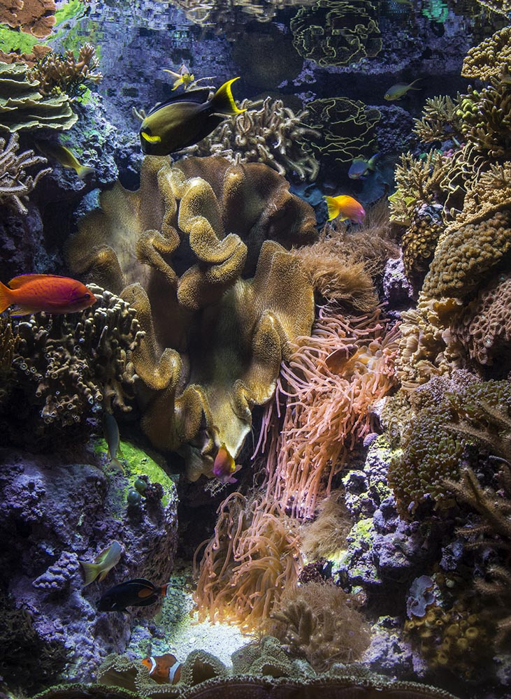 One of the smaller, yet spectacularly aquascaped reef aquarium displays
