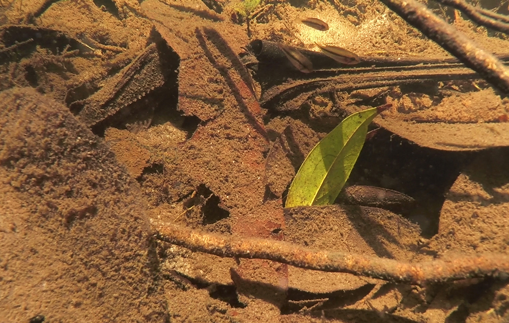 The dense leaf litter coating the bottom provides both food and shelter for many species
