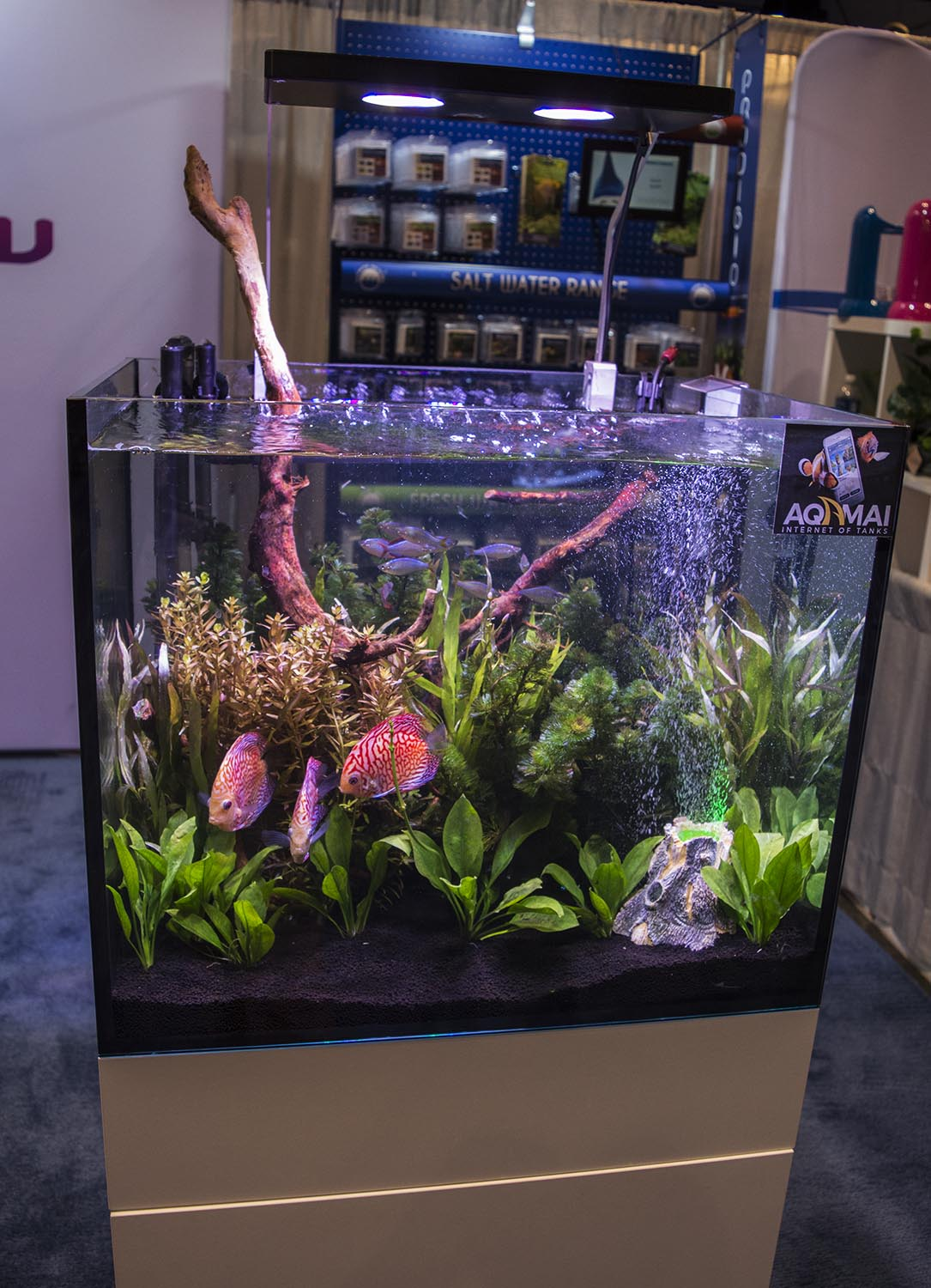 This vibrant planted discus display at the Hydor booth features their new Aqamai controllable LED