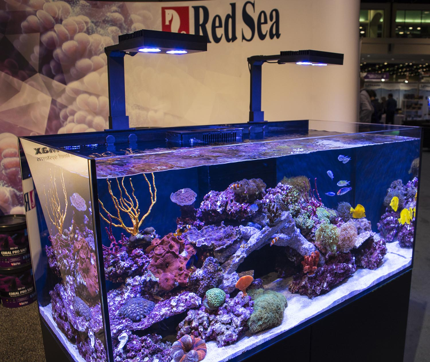 An immaculate display tank from Red Sea showcasing their Reefer line of high end all-in-one systems