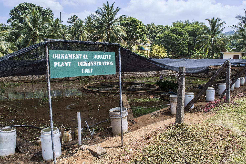 Photo Tour Sri Lanka S Ornamental Fish Breeding And Training Center
