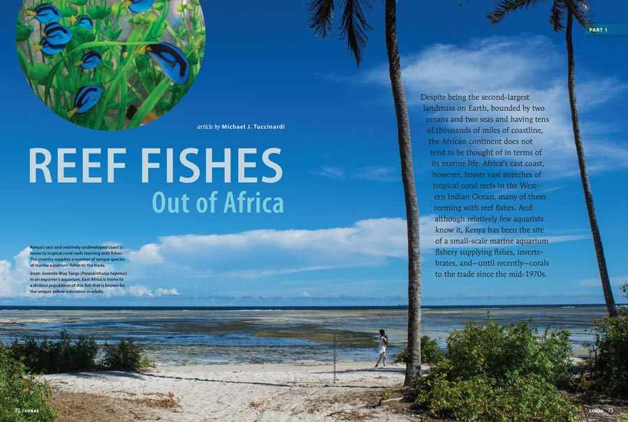CORAL Sr. Editor Michael J. Tuccinardi travels to Kenya and returns with an inside look at East Africa's Marine Aquarium Trade.