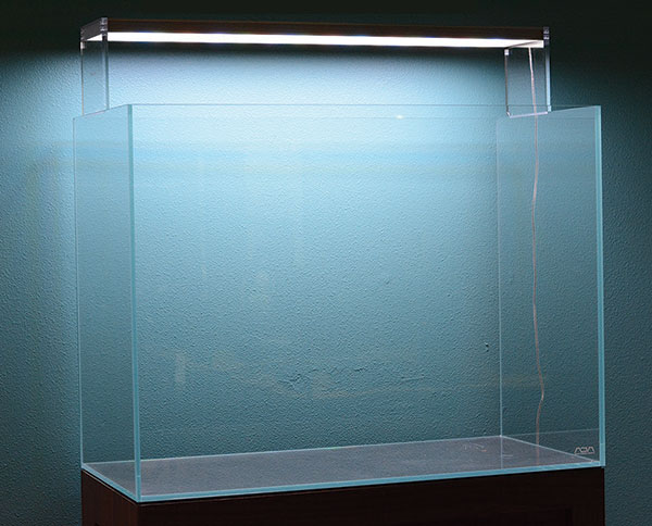 An empty aquarium is a vessel with endless creative potential.