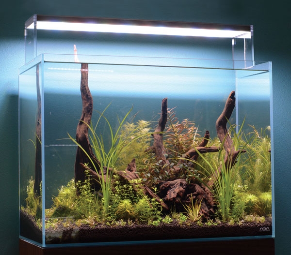 "The author's demonstration Nature Aquarium, created for this article, a week after planting. This aquascape is a 60 x 30 x 45-cm (approx. 24 x 12 x 18-inch) high-clarity rimless aquarium with pre-soaked driftwood and Aqua Soil that in a few short weeks will be filled with a riot of plant biodiversity and beauty. The plants used in this layout include Glossostigma elatinoides, Blyxa japonica, Syngonathus sp. ""Giant,"" Cyperus helferi, Hemianthus micranthemoides, Rotala sp. Green, Rotala sp. H'ra, Myriophyllum mattogrossense, Ludwigia x. lacustris, Potamogeton gayi, Mayaca fluviatilis, Bucephalandra spp., and Willow Moss."