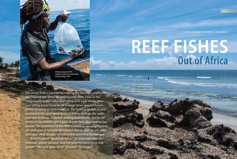 Reef Fishes Out of Africa, Part 2. CORAL Magazine, July/August 2017.