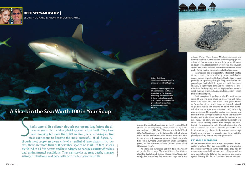 CORAL Magazine's Reef Stewardship column looks at the past and future threats facing sharks in the Maldives.