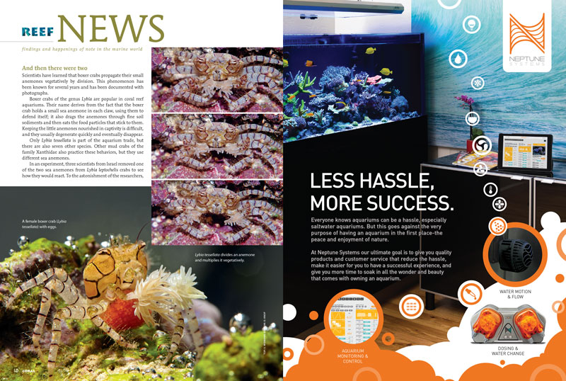 Boxing Crabs propagate their own anemones? Banning sunscreens to protect reefs? Fireflies among fishes? Find the answers in this issue's Reef News!