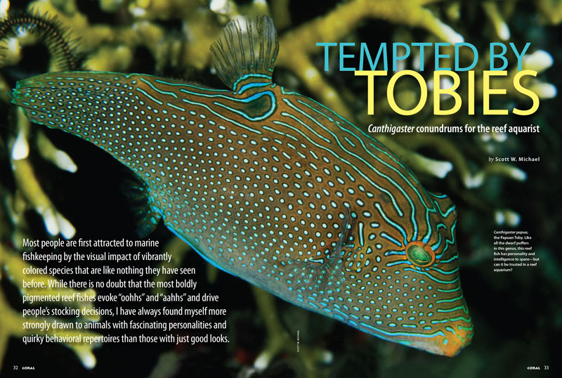 Our cover story, Tempting Tobies, opens with Canthigaster papua, the Papuan Toby. Like all the dwarf puffers in this genus, this reef fish has personality and intelligence to spare—but can it be trusted in a reef aquarium?