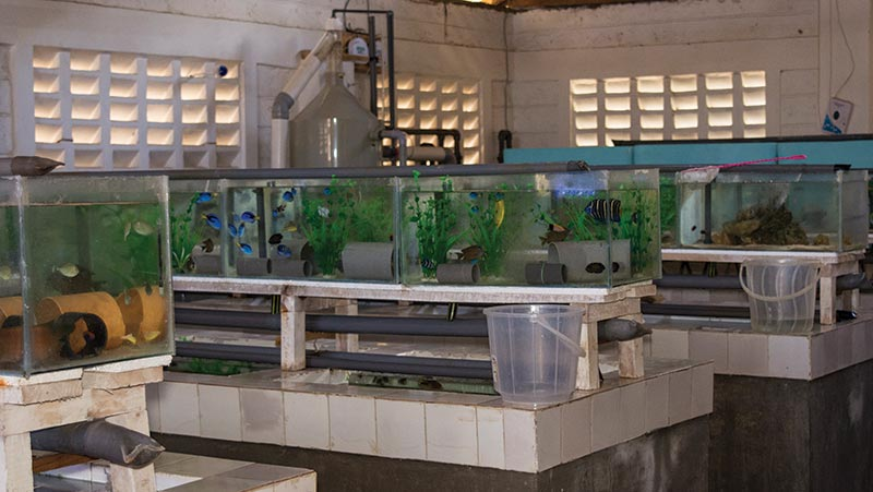 Fish-holding systems at the facility of Kenya Marine Center, a large exporter located just outside the city of Mombasa.